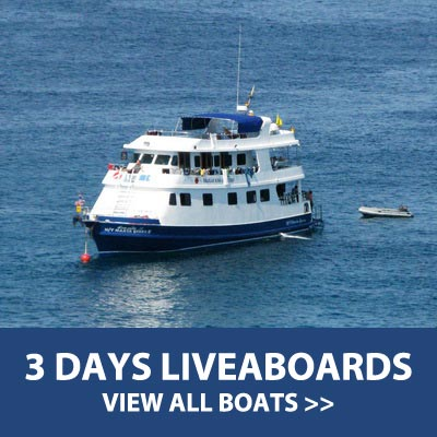 3 Days diving liveaboard trips to the Southern or Northern part of the Andaman sea