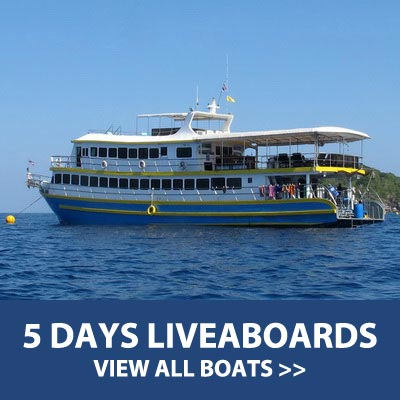 5 Days liveaboard trips with 19 dives at the Similan islands, Koh Bon, Koh Tachai and Richelieu rock