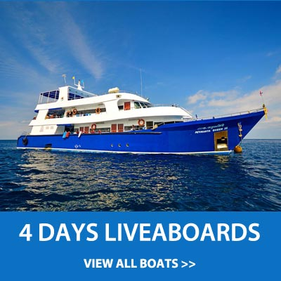 4 Days liveaboard trips to the Similan islands, Koh Bon, Koh Tachai and Richelieu rock