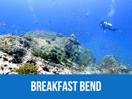 See the starfish at granite rock at Breakfast bend dive site