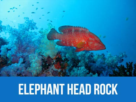 Information and dive map of Similan islands dive site Elephant Head rock