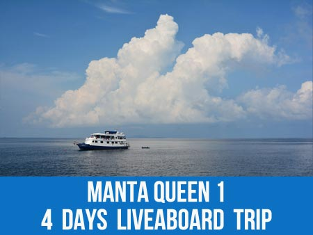 Join the MV Manta Queen 1 liveaboard on the sea turtle expedition