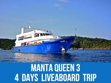 Join the Thailand liveaboard Manta Queen 3 and dive to see the starfish