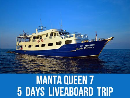 Scuba dive with triggerfish on Thailan liveaboard Manta Queen 7