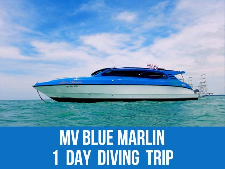 Dive at the Koh Bon dive site with a daytrip on the Blue Marlin