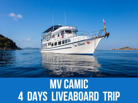 Discover the sea turtles on the Similan liveaboard MV Camic