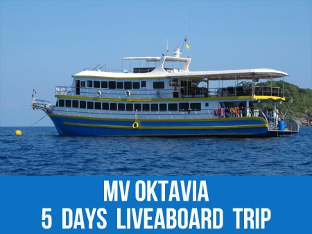 Join MV Oktavia Khao Lak liveaboard to see the triggerfish