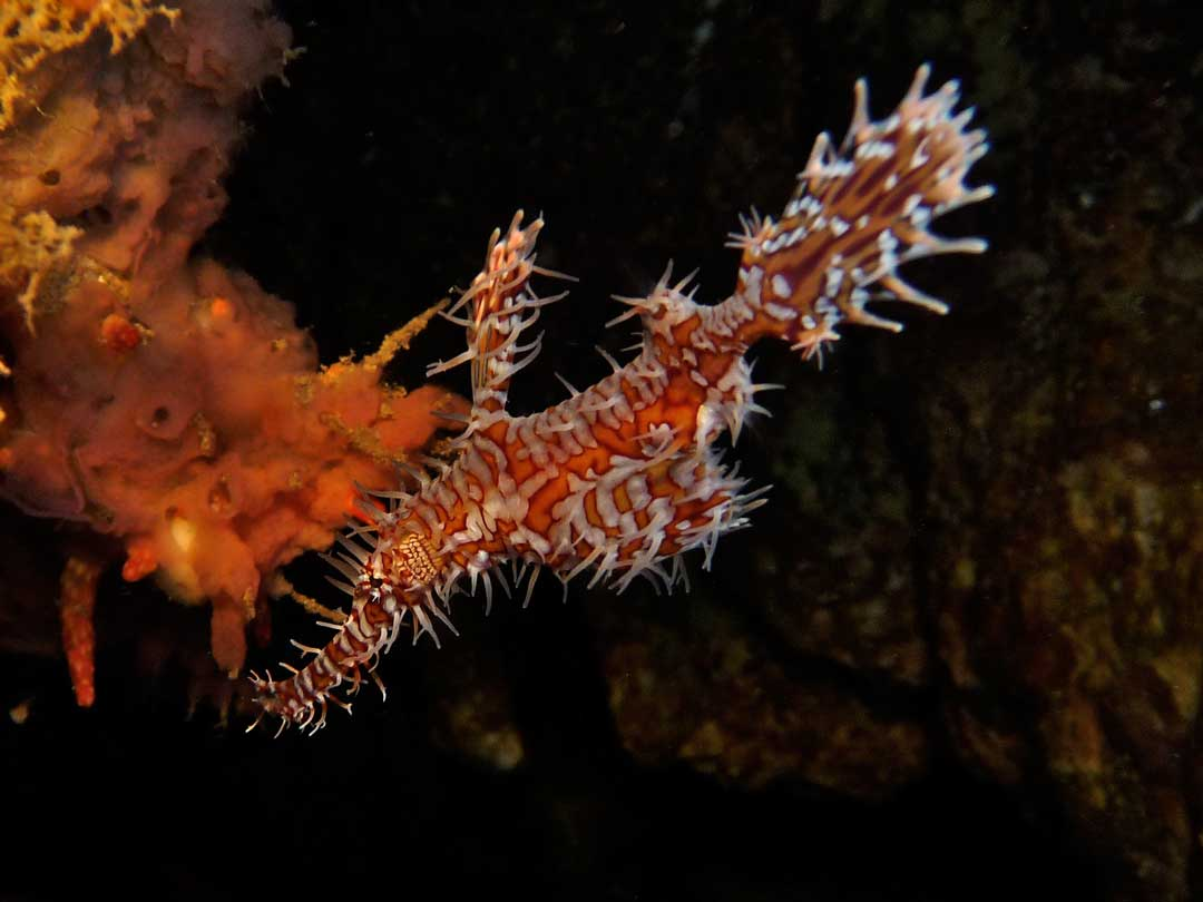 Ghost pipefish at Padi AOWD course dive at Boonsung wreck