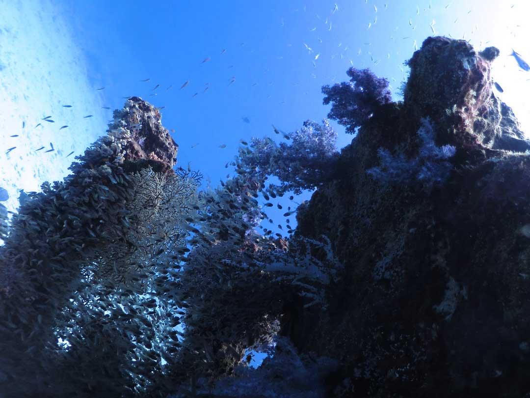Corals at the Andaman sea