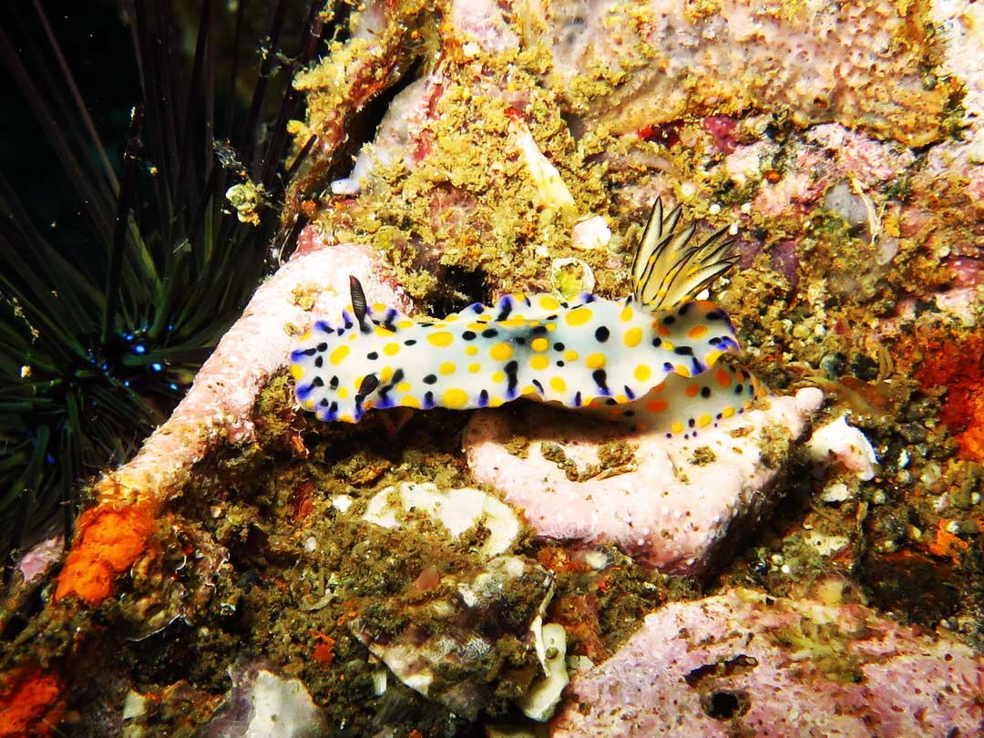 Nudibranch seen on diving trip at Similan islands