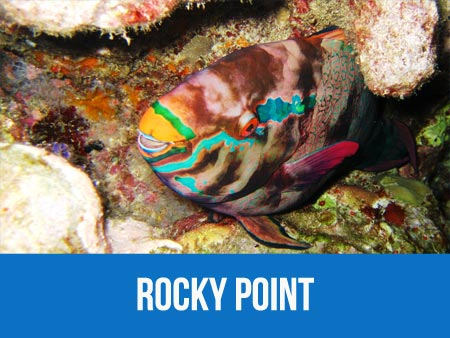 Information and dive map of Similan islands dive site Rocky Point