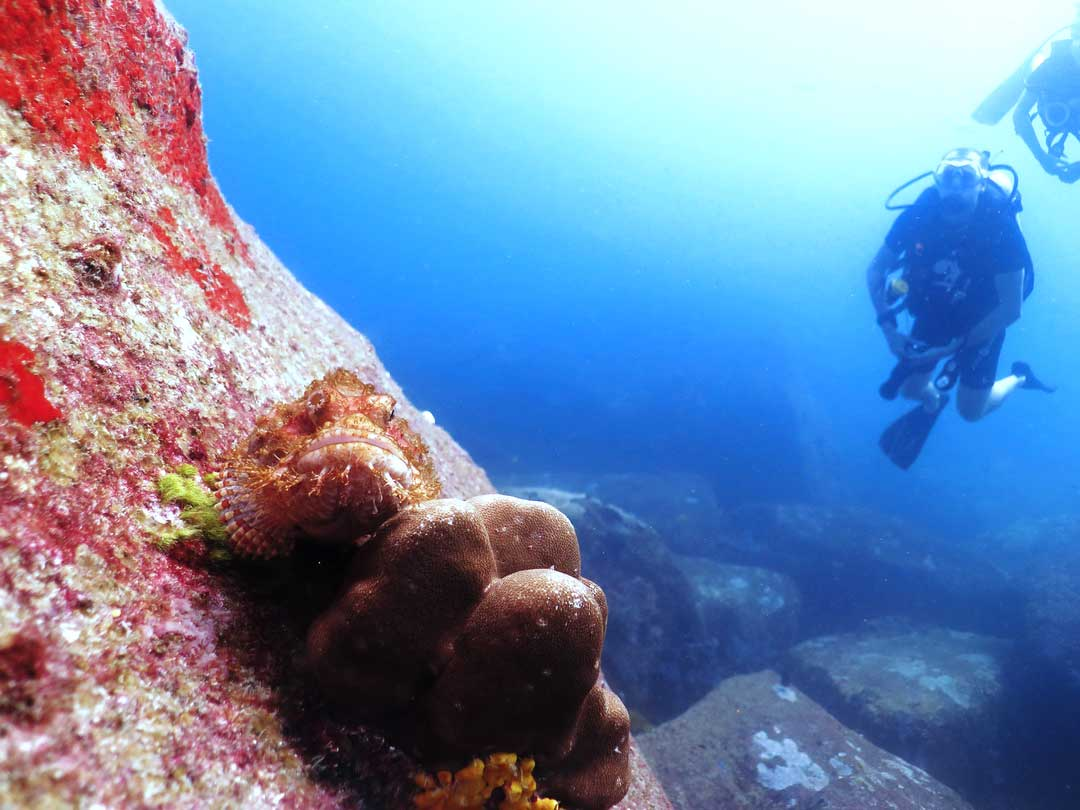 Scorpionfish with divers at the Similan islands