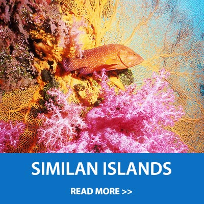 Scuba diving daytrip to the Similan islands on the MV Sundancer