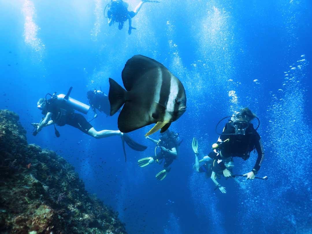 Scuba divers with a batfish at the Similan islands