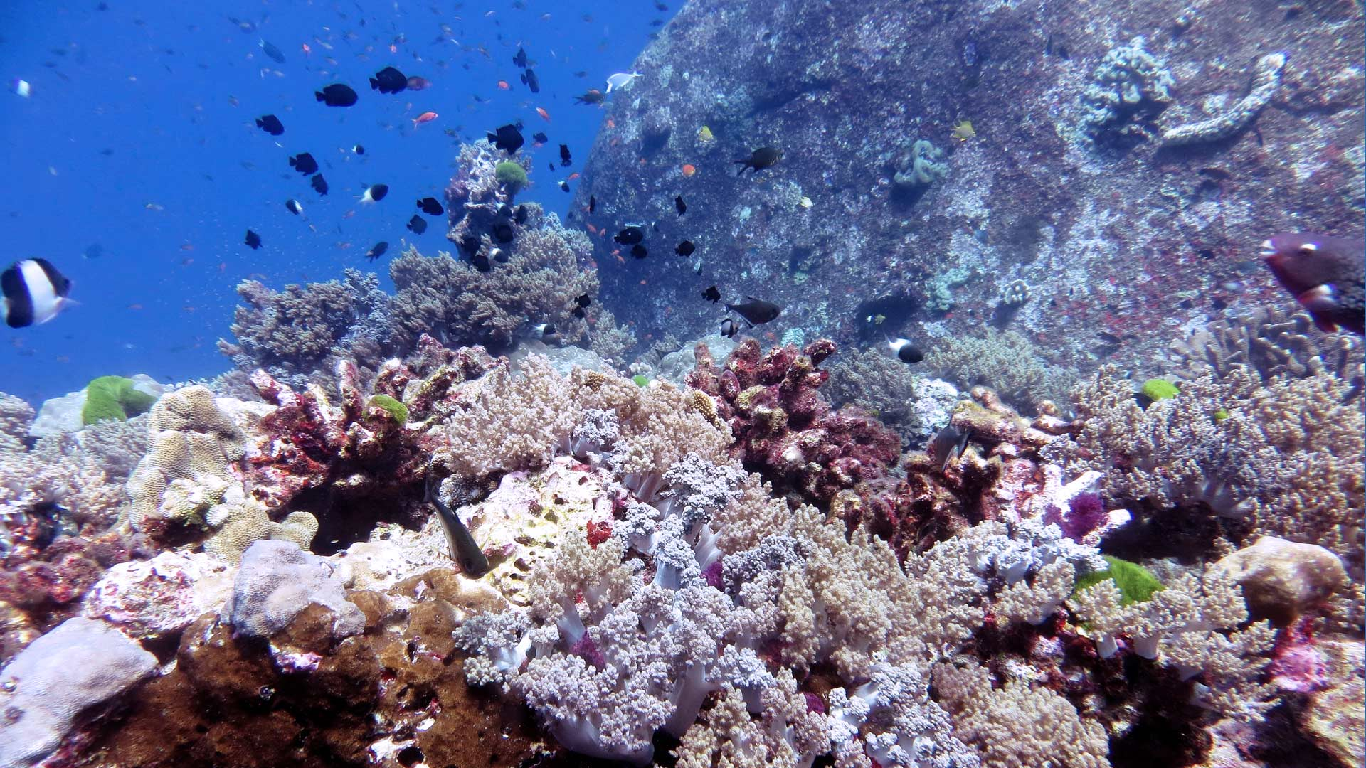 Read all about the coral reef science