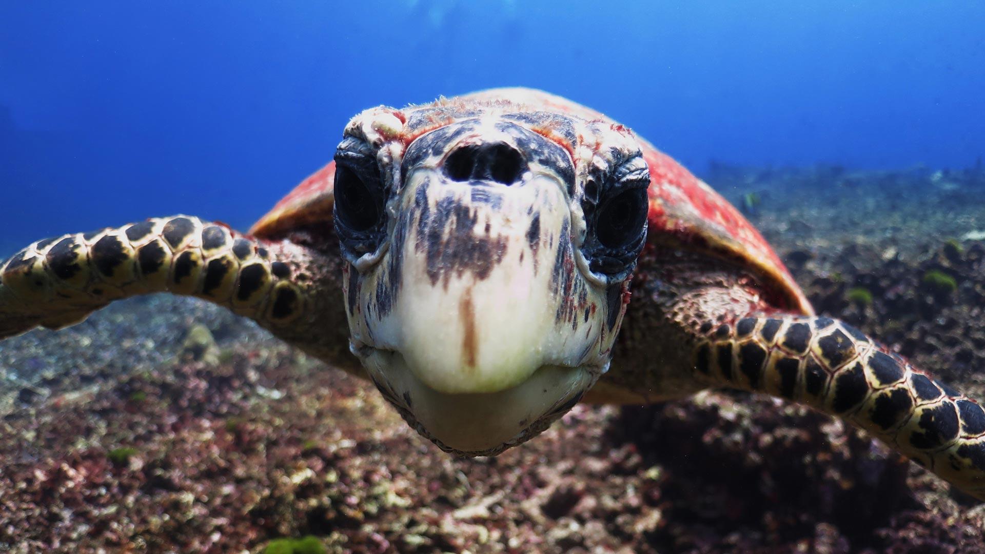 Manta Queen 5 is a 3 days Similan islands diving liveaboard