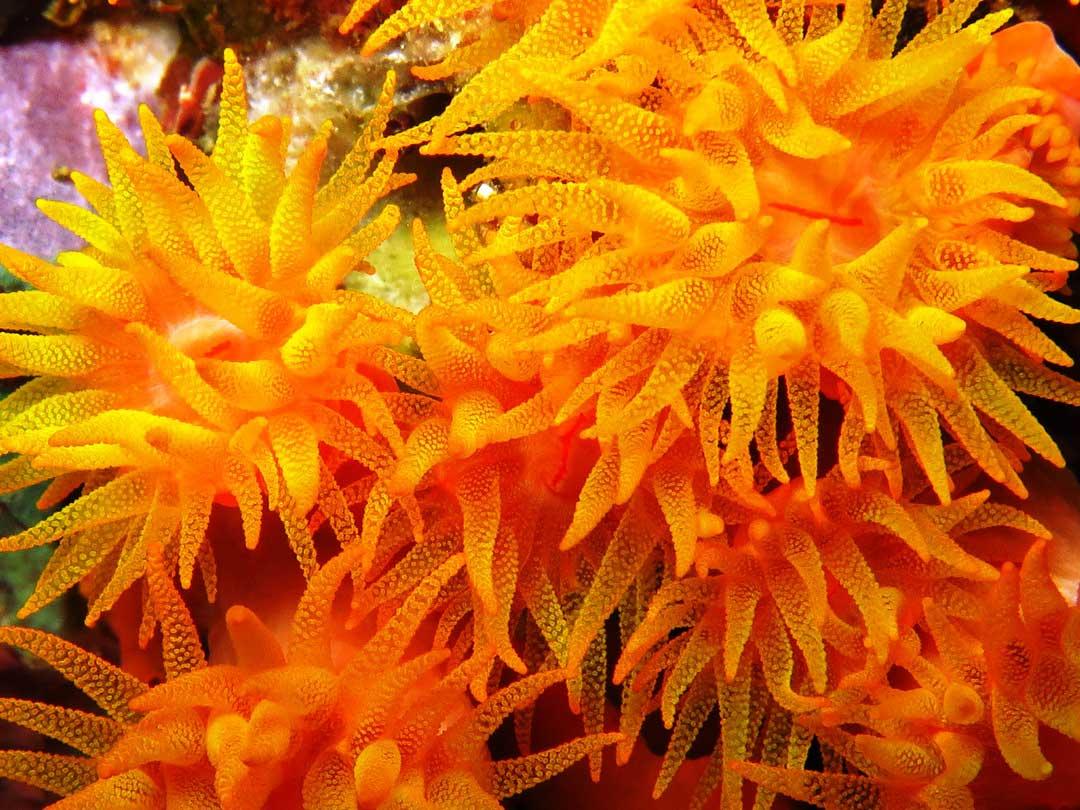 Tube coral on a Koh Bon diving tour