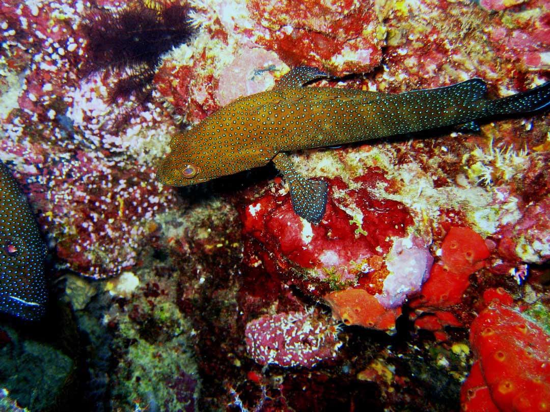 Grouper at the Richelieu rcok dive site