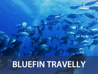 Photos of the Bluefin Trevally in this Similan islands fish guide
