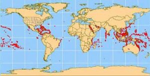 Coral reefs around the world