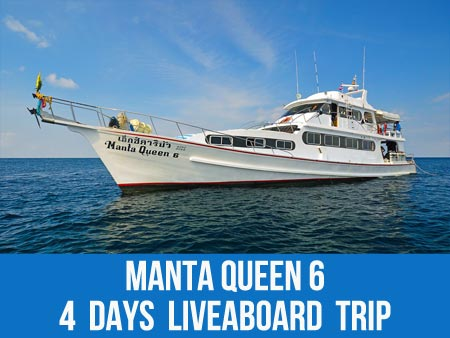 Similan Scuba dive with sea snake on the Manta Queen 6