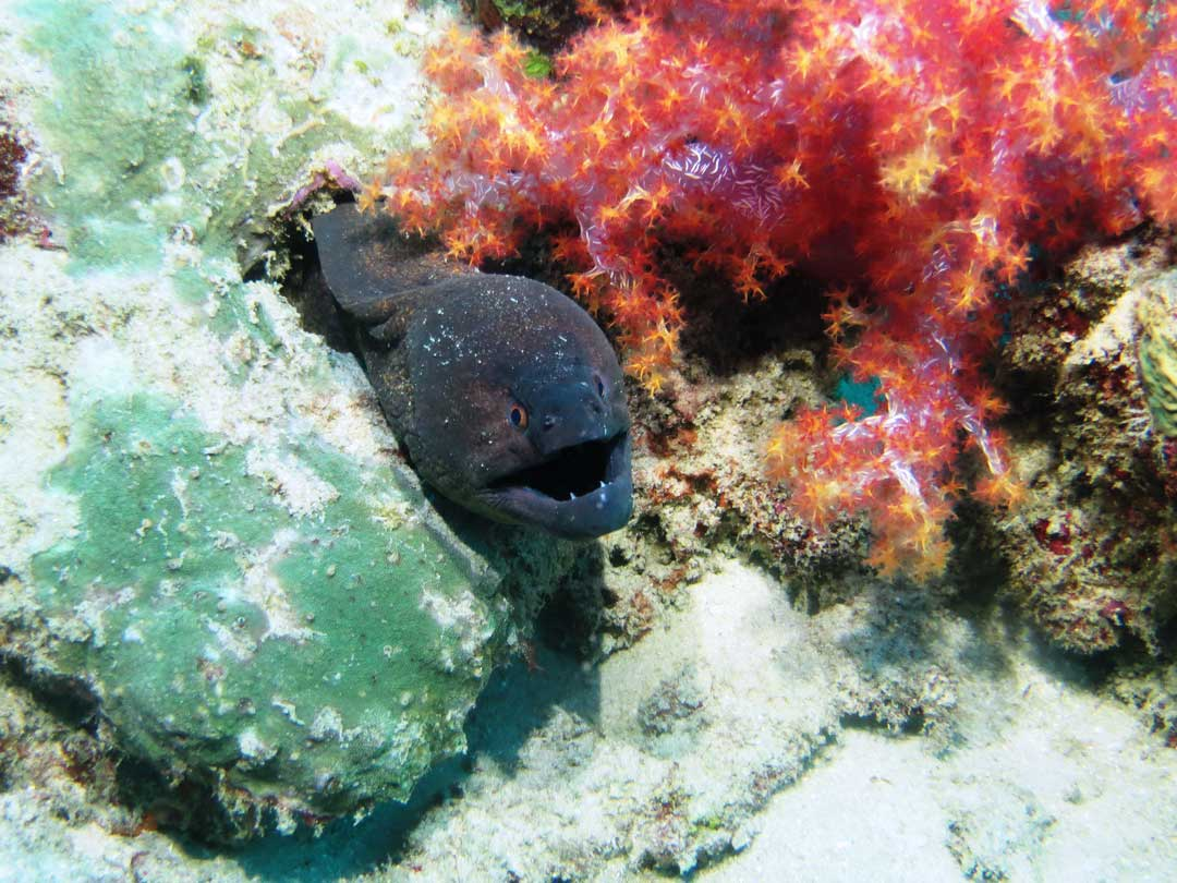 Go Smilan scuba diving and get close to the moray eel