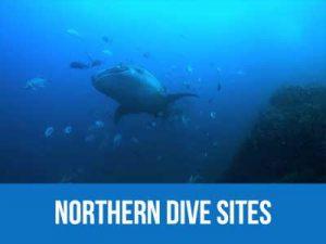 Northern dive sites : Koh Bon, Koh Tachai and Richelieu rock