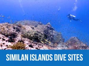 Information and dive maps of the Similan islands dive sites