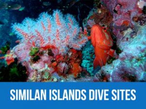 Similan islands dive site information and dive map