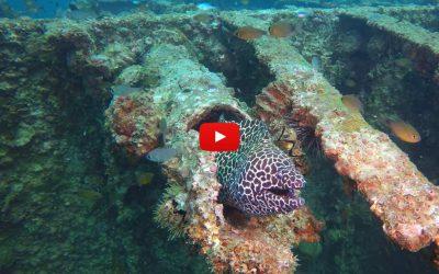 Moray eel at Boonsung wreck